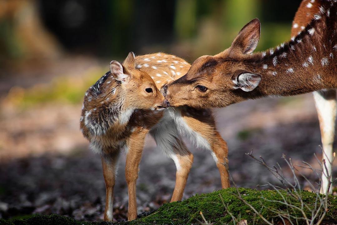 Nuestros Animales